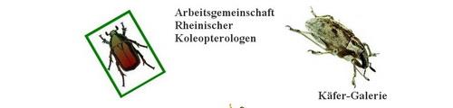 www.koleopterologie.de