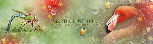 www.martinpustelnik.com